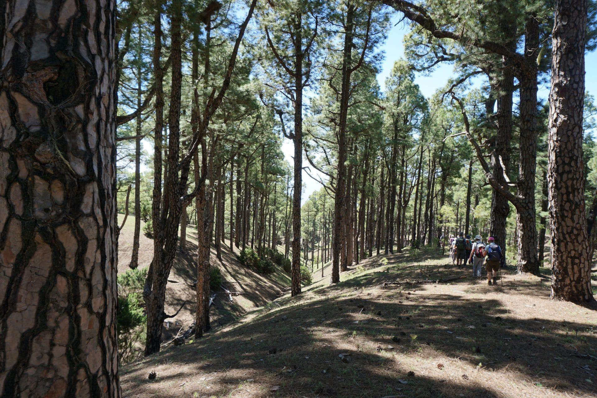 Ile-canaries-hierro_helyum_trekking_photo_pinar_Espagne