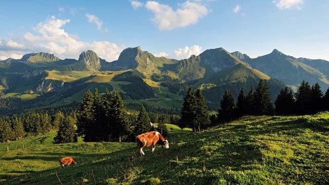 """<span style=""""font-size:1.5em;""""><span class=""""caps"""">NATURE</span></span><br>Le Gantrisch: Petit paradis suisse. <br> /// juillet 2018 /// <br><span style=""""color: #b0cc00;""""> Places disponibles </span>"""